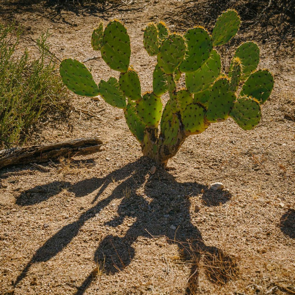 saguaro-12.jpg