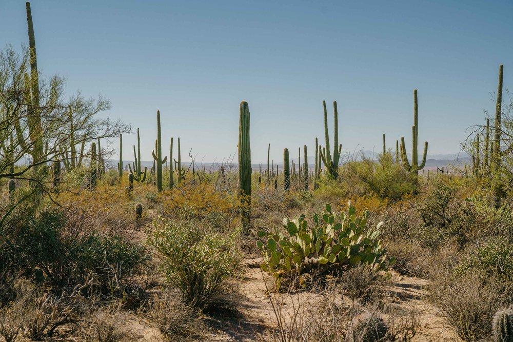 saguaro-13.jpg