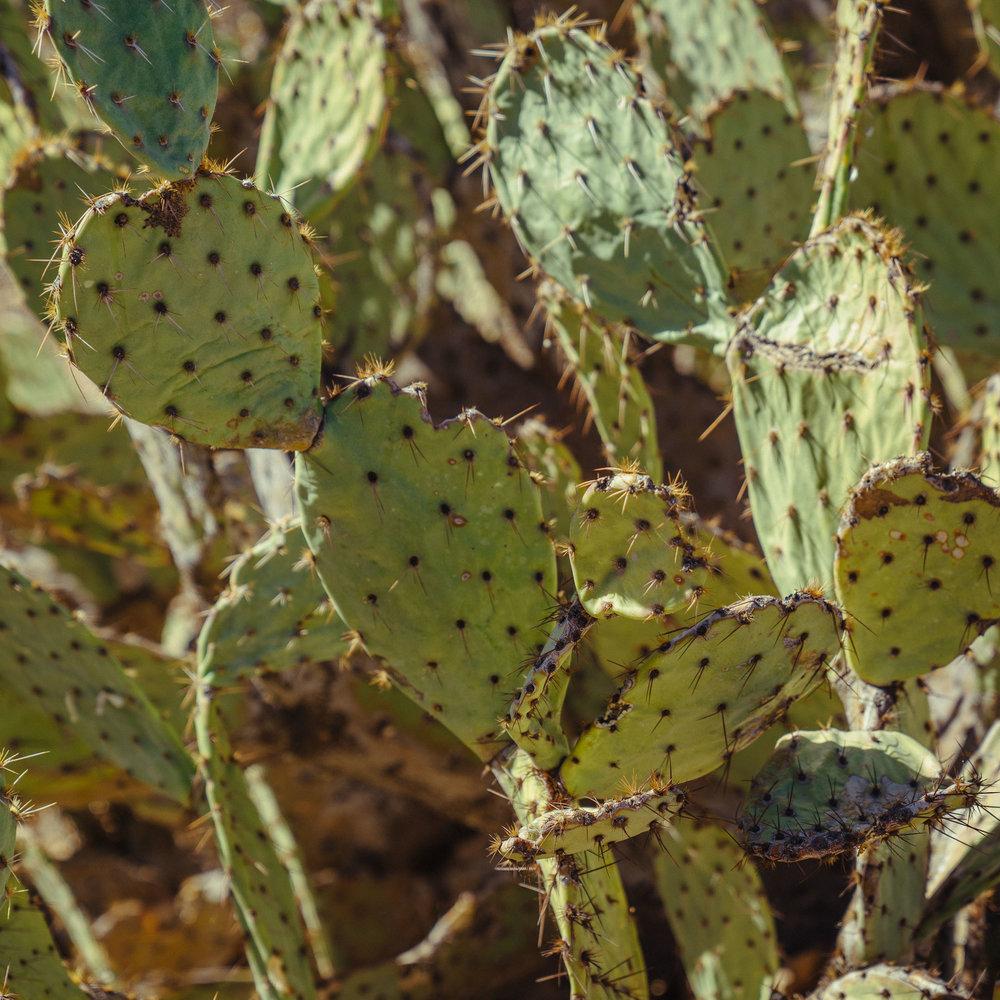 saguaro-14.jpg