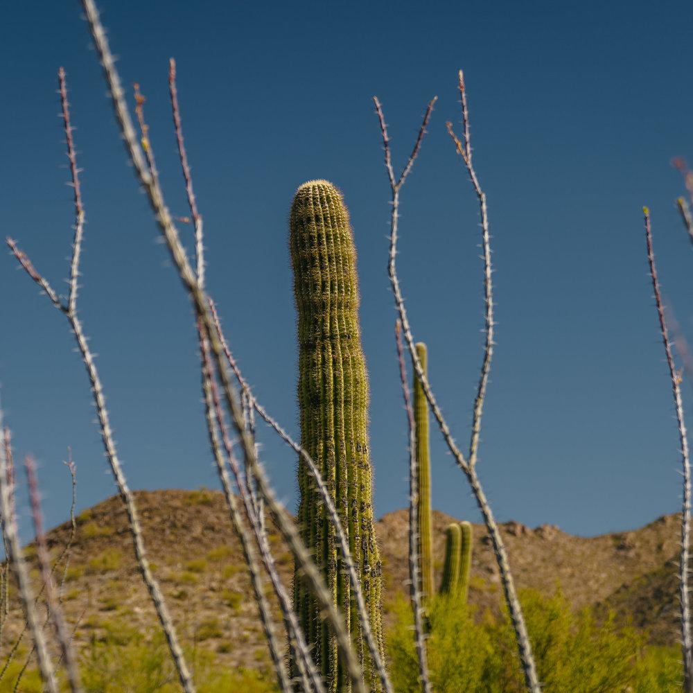 saguaro-15.jpg