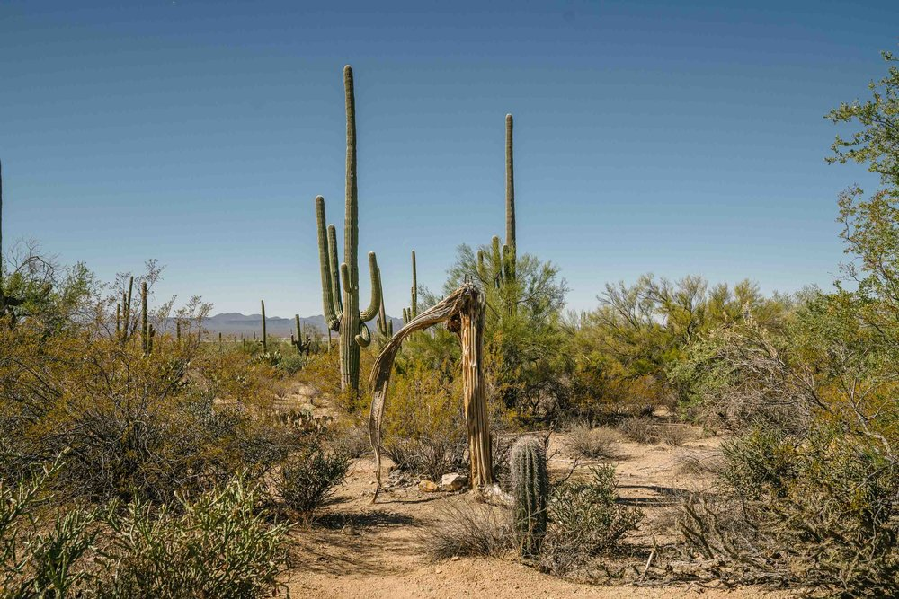 saguaro-18.jpg