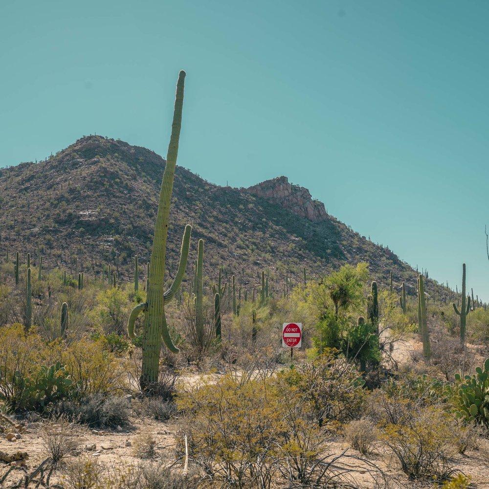 saguaro-24.jpg