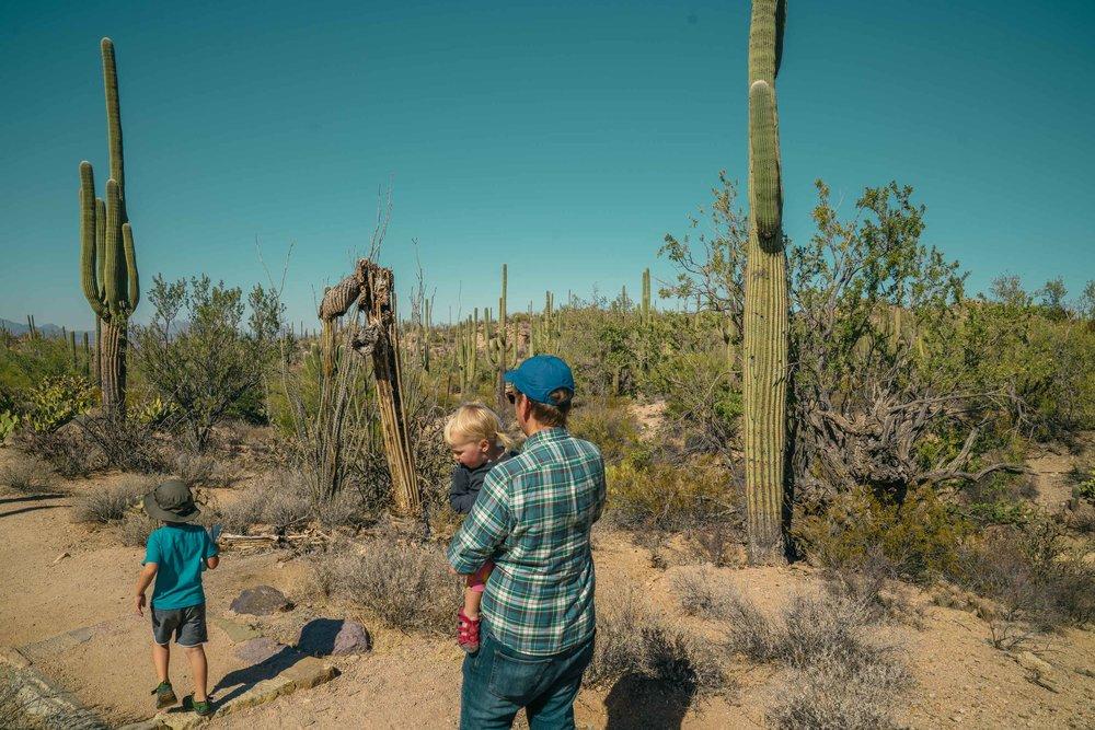 saguaro-25.jpg