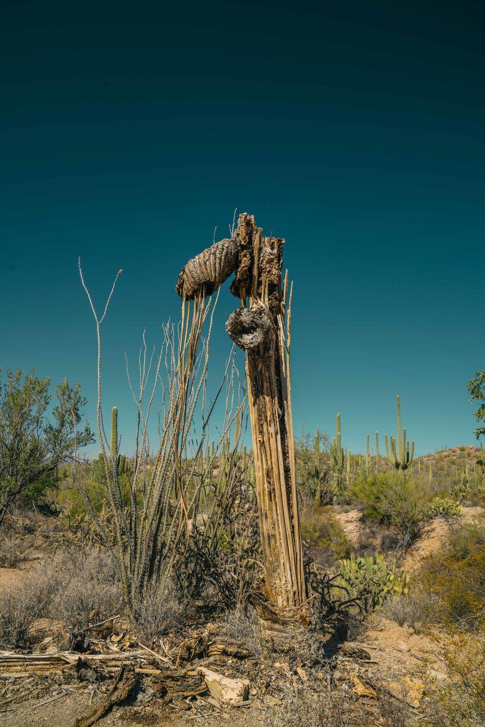 saguaro-26.jpg