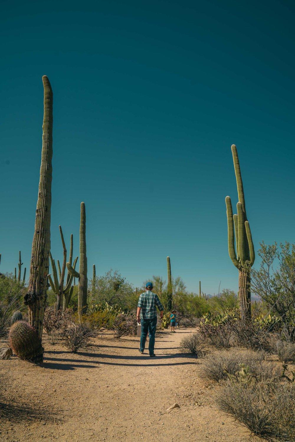 saguaro-27.jpg
