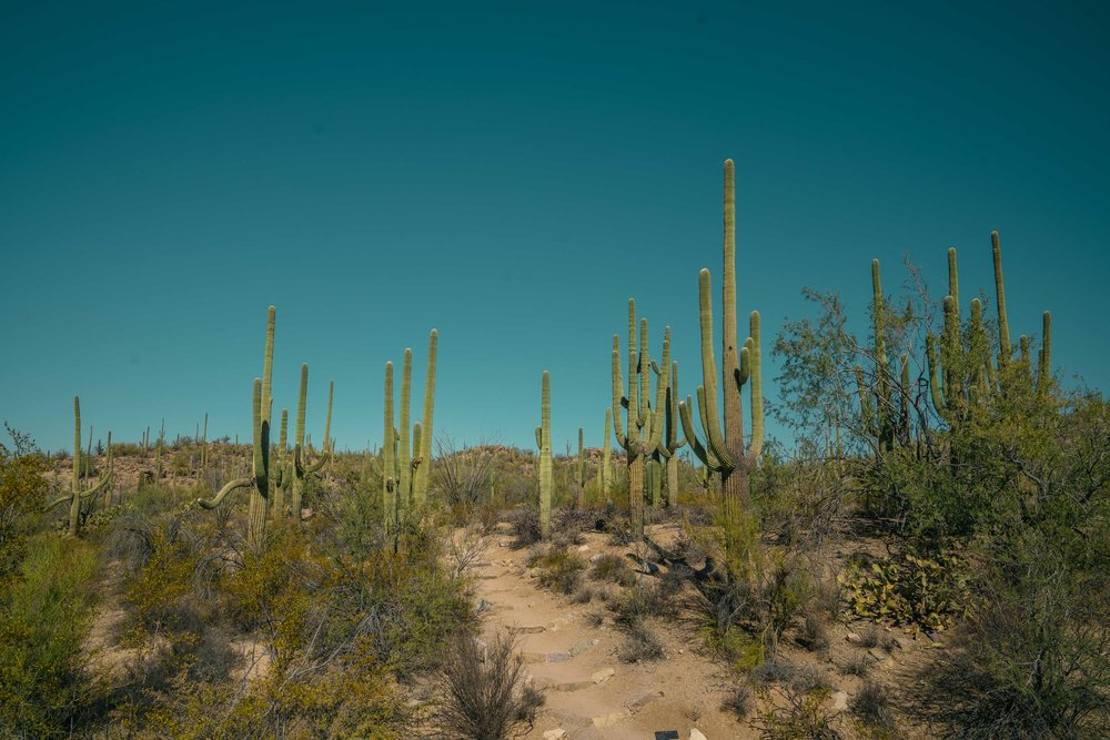 saguaro-28.jpg