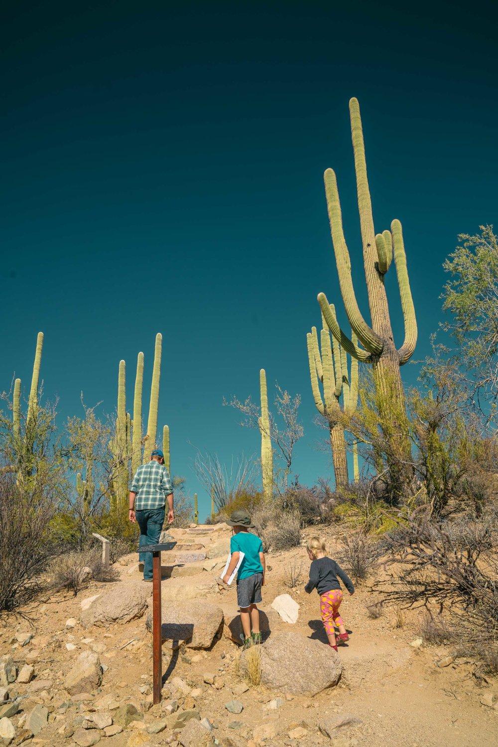 saguaro-29.jpg