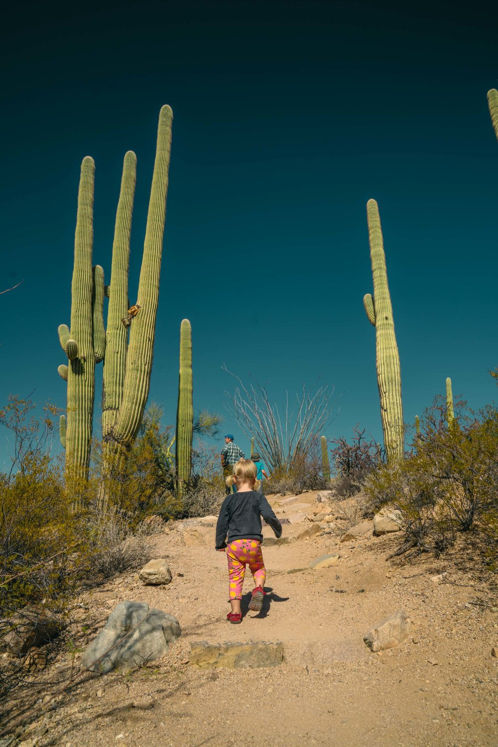 saguaro-30.jpg