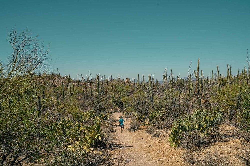saguaro-32.jpg