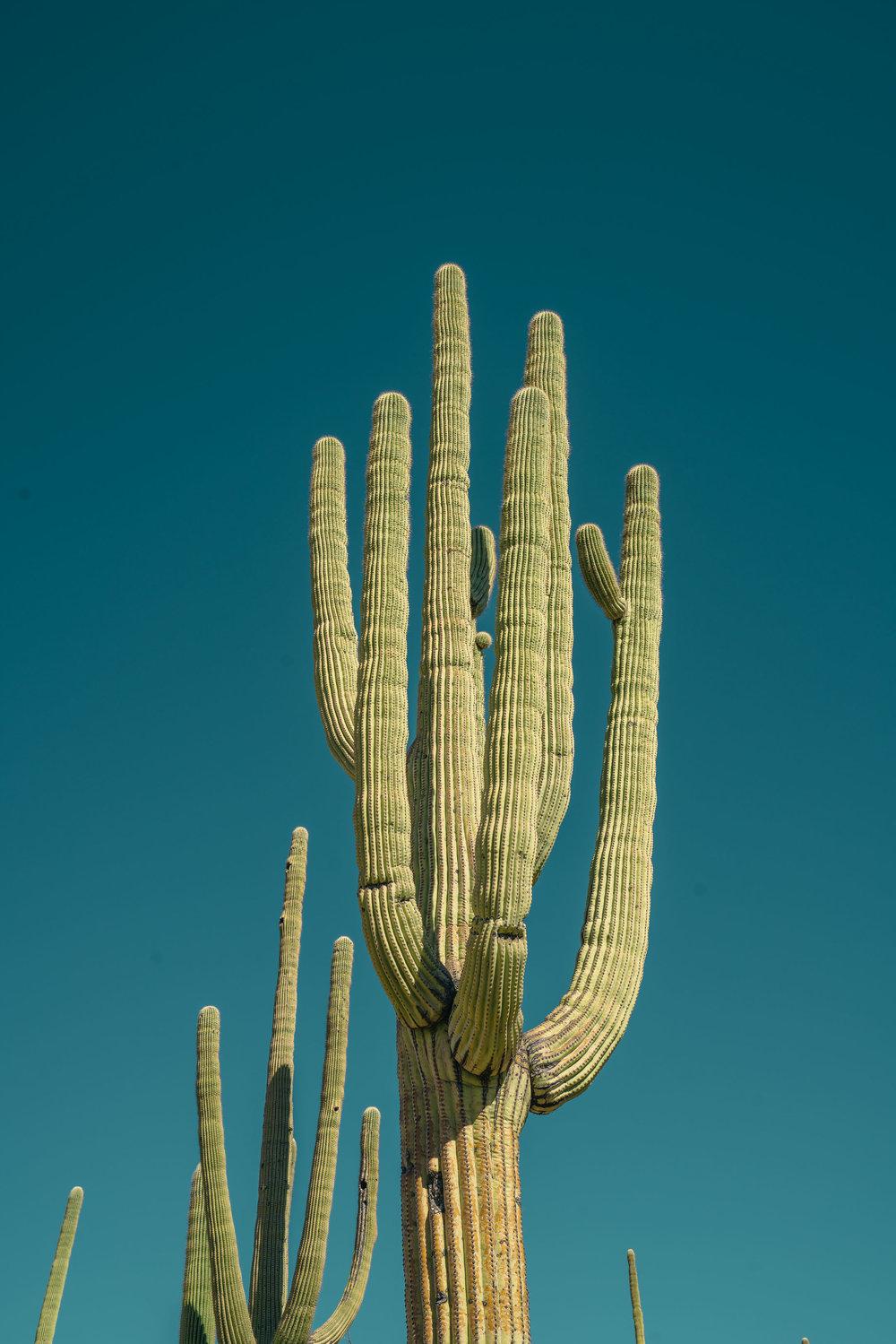 saguaro-31.jpg