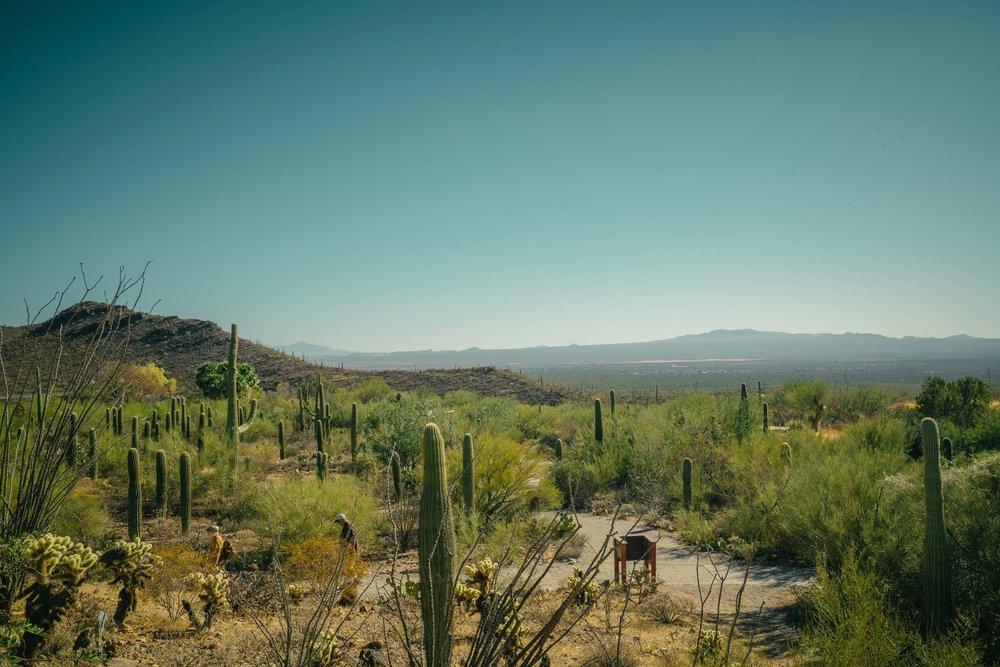 saguaro-64.jpg