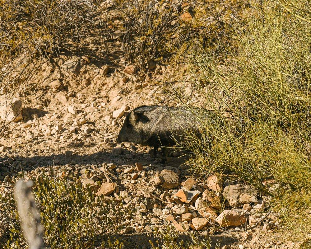 saguaro-72.jpg