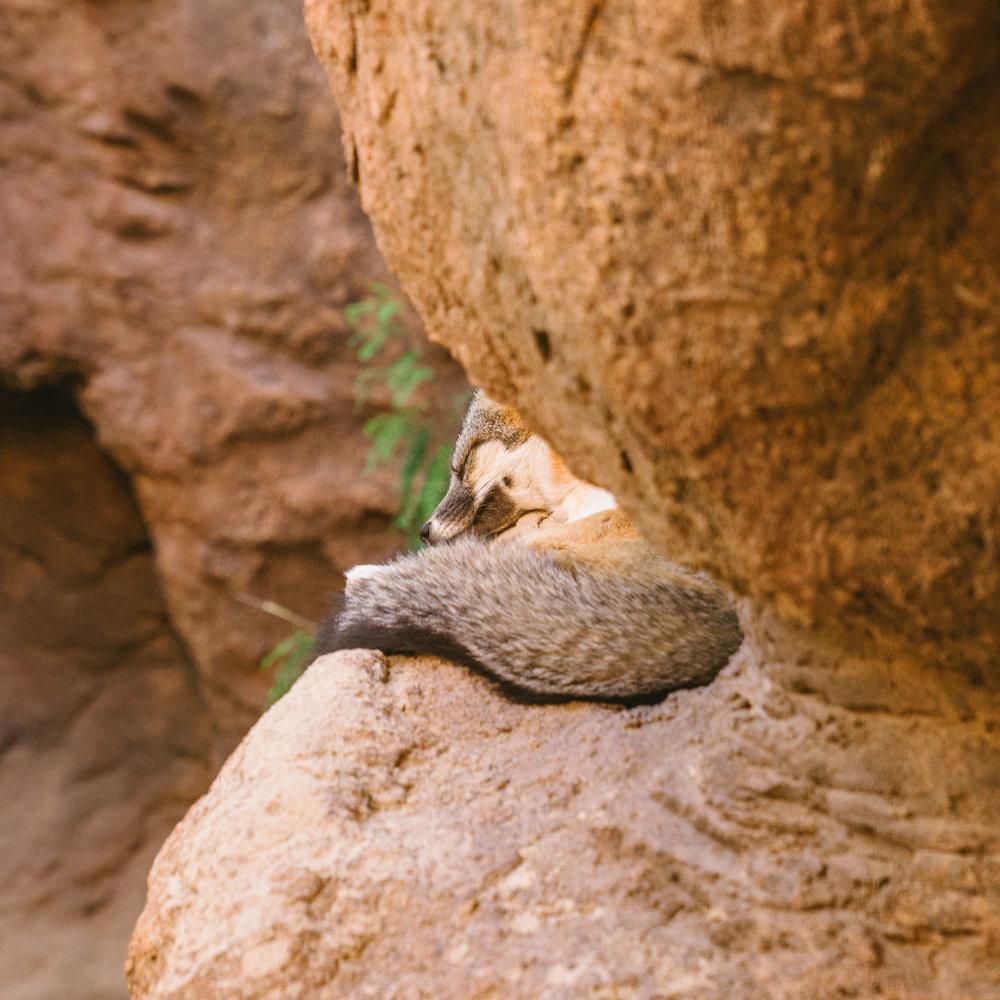 saguaro-74.jpg