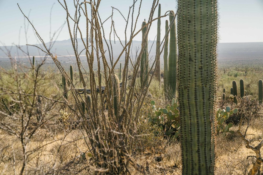 saguaro-75.jpg