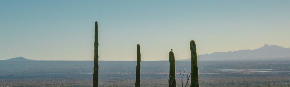 saguaro-76.jpg