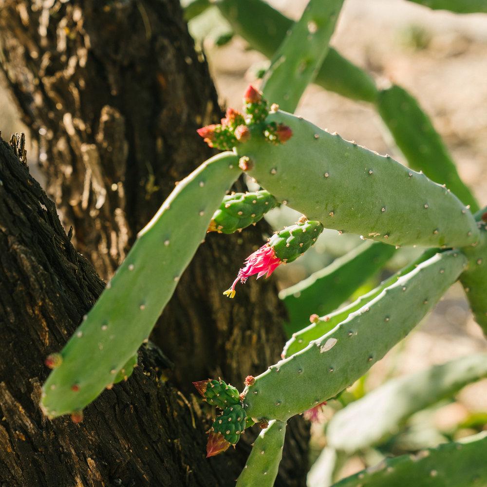 saguaro-77.jpg