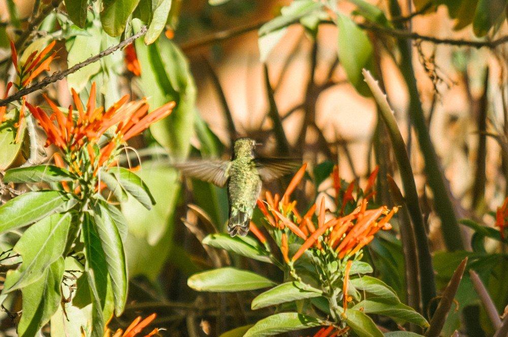 saguaro-83.jpg
