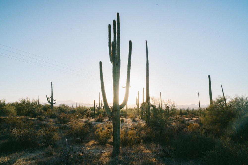 saguaro-86.jpg