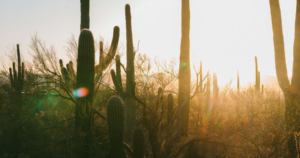 saguaro-87.jpg