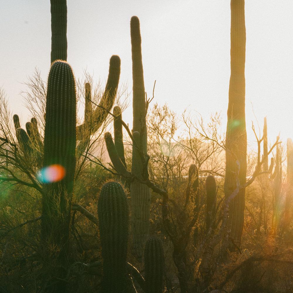 saguaro-88.jpg