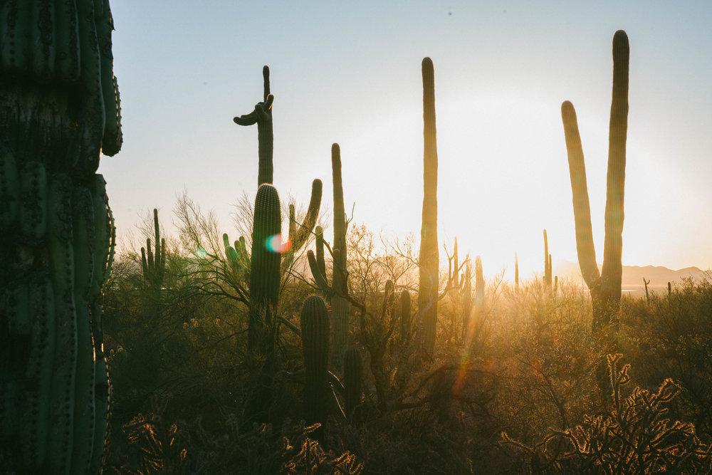 saguaro-89.jpg