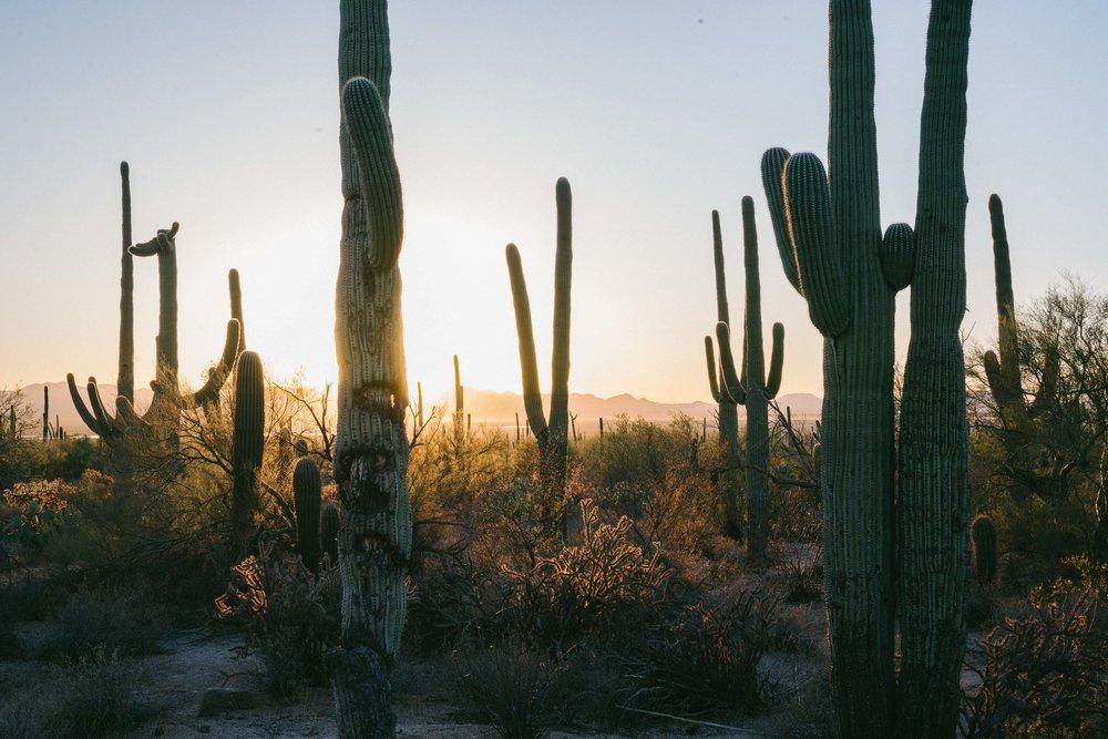 saguaro-90.jpg