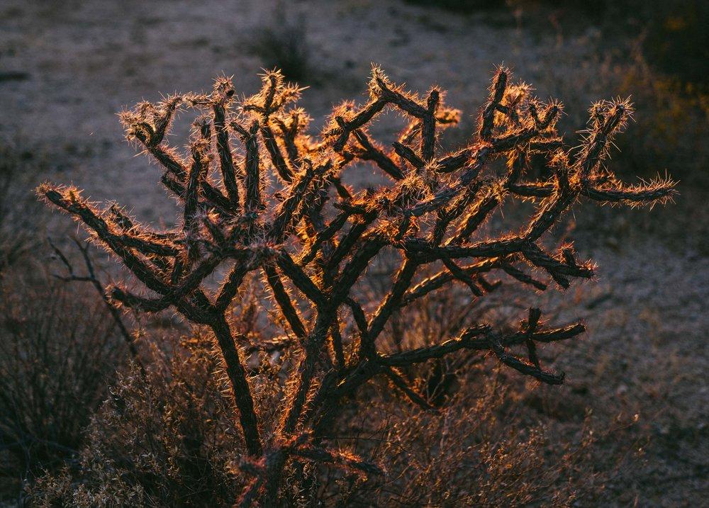 saguaro-91.jpg