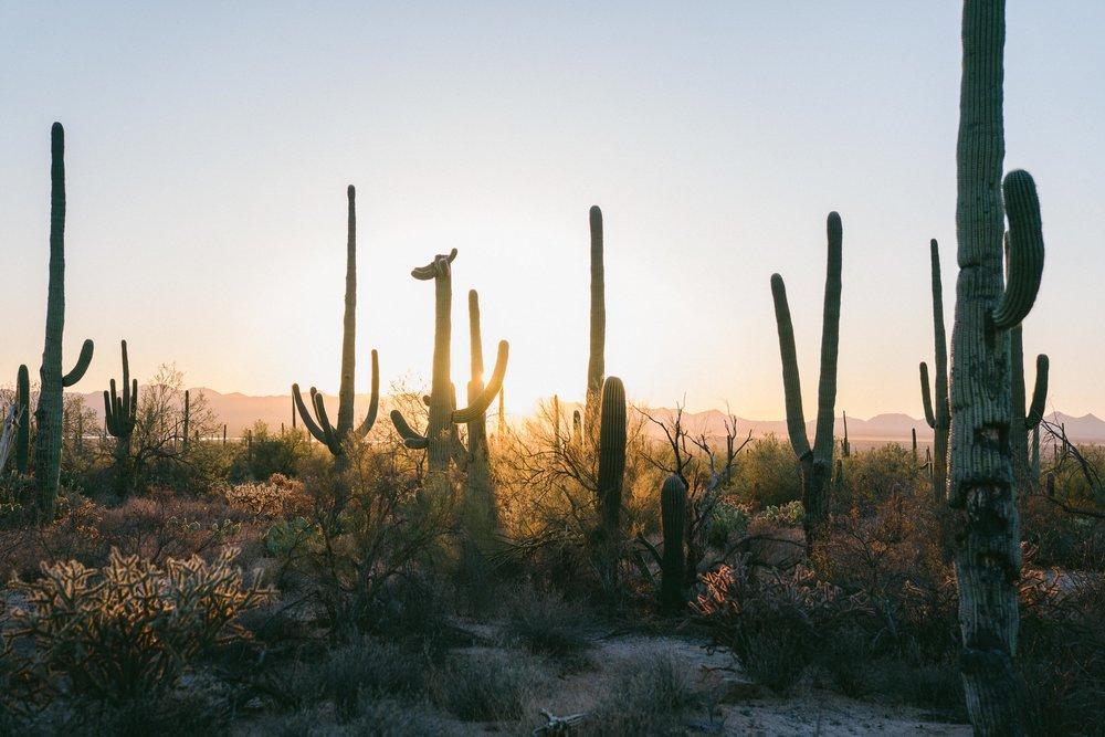 saguaro-92.jpg