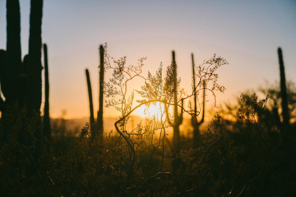 saguaro-93.jpg