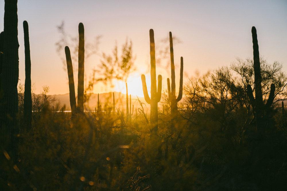 saguaro-94.jpg