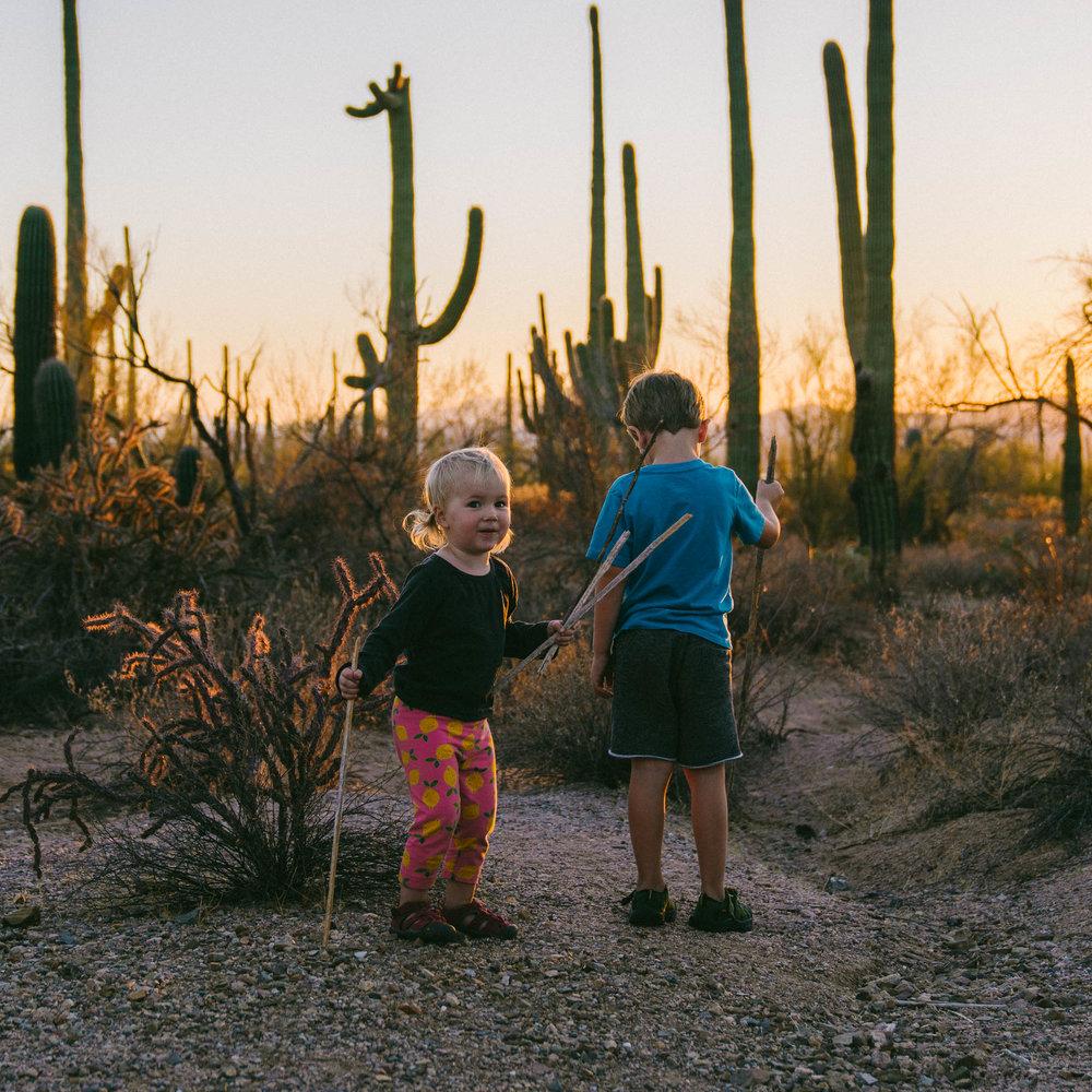 saguaro-96.jpg