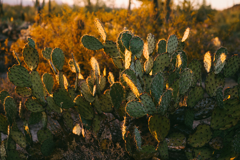 saguaro-97.jpg