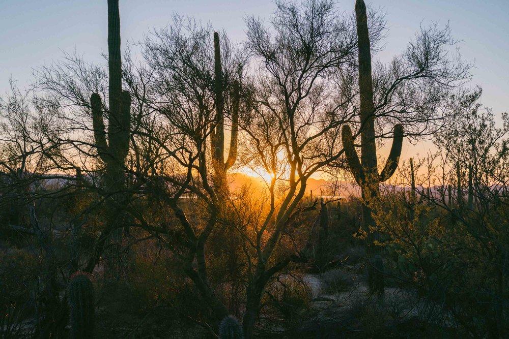 saguaro-102.jpg