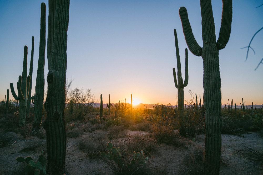 saguaro-103.jpg