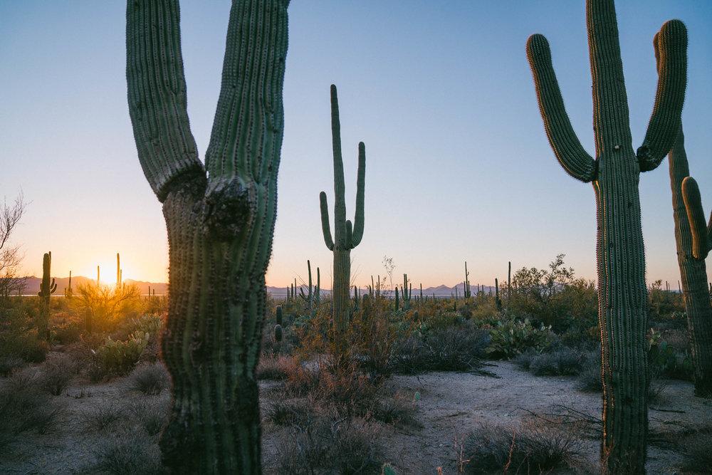 saguaro-104.jpg