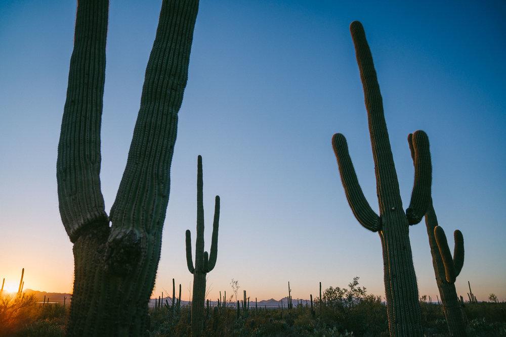 saguaro-105.jpg