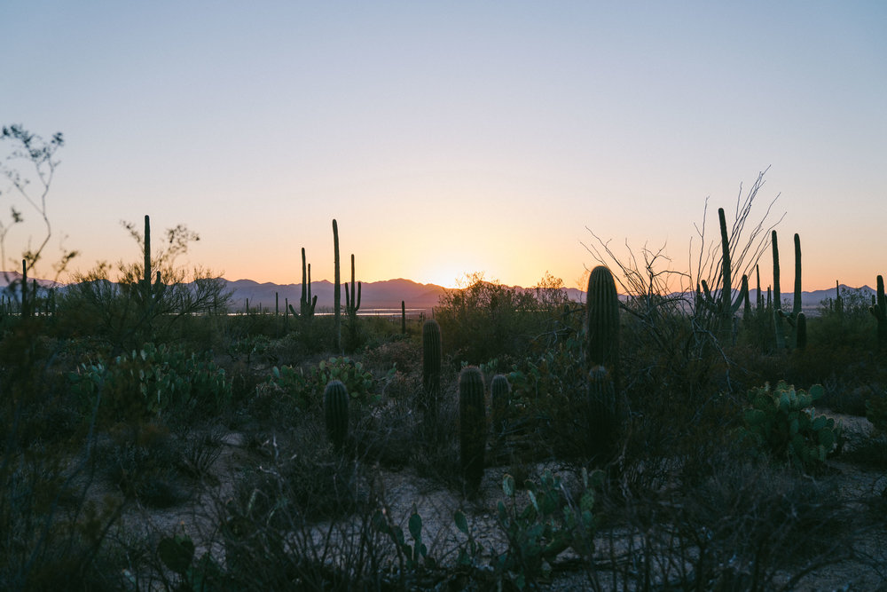 saguaro-108.jpg