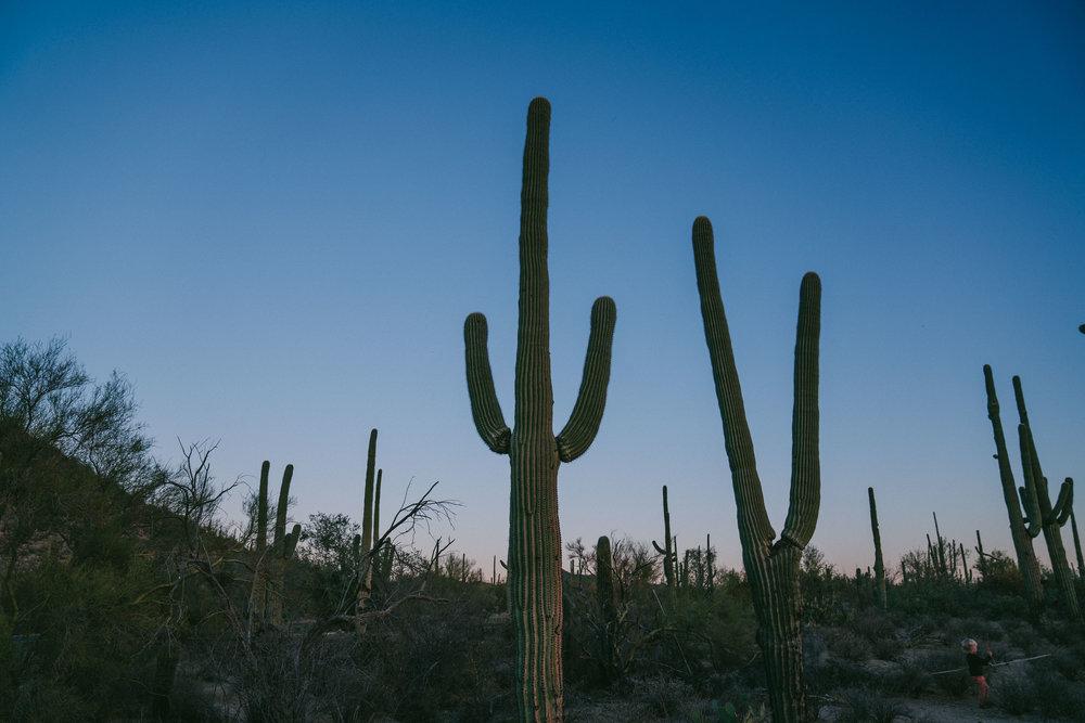 saguaro-109.jpg