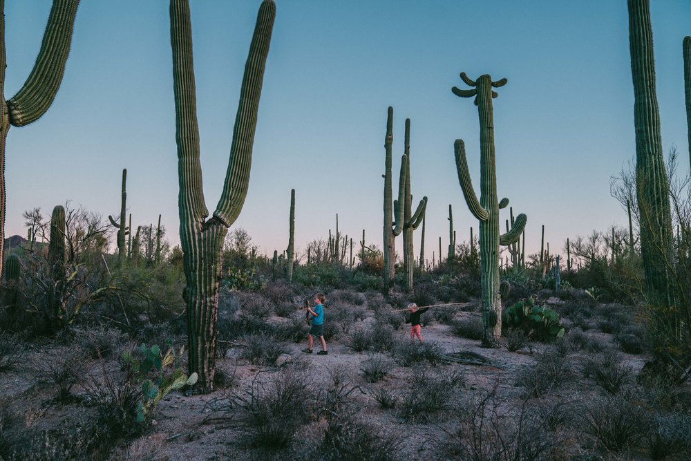 saguaro-110.jpg