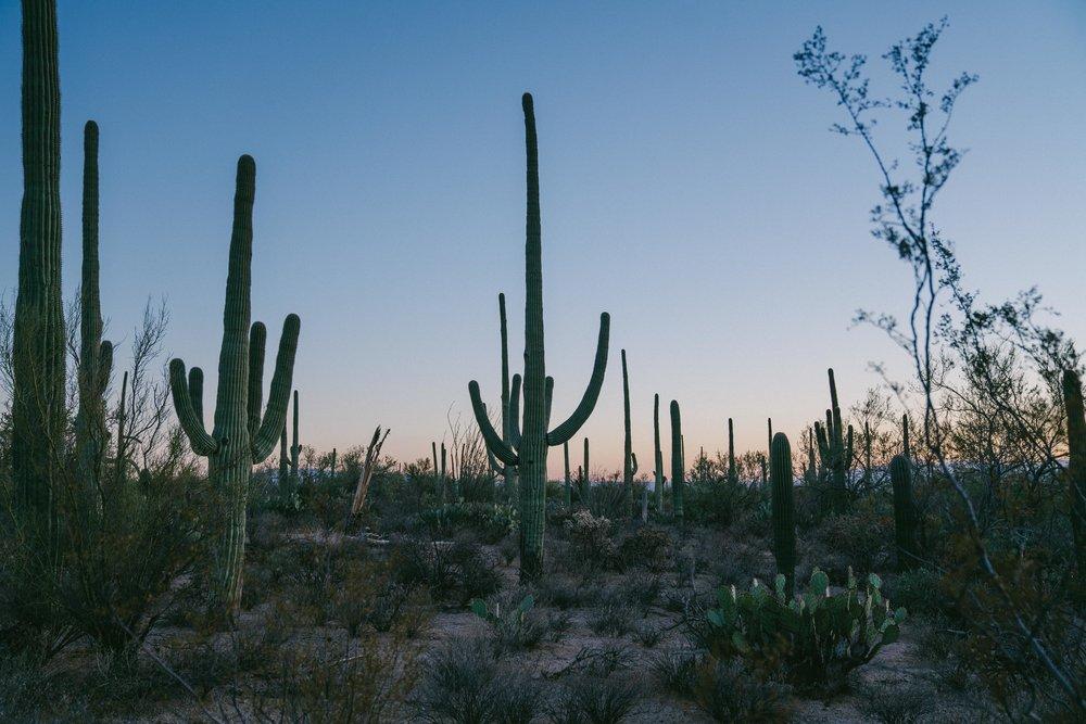 saguaro-111.jpg
