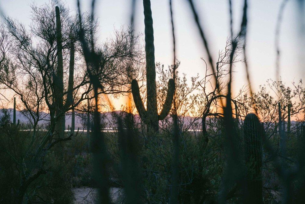 saguaro-112.jpg