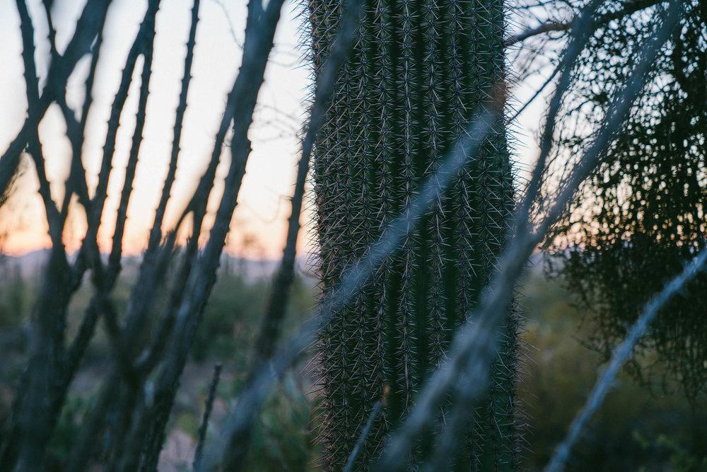 saguaro-113.jpg