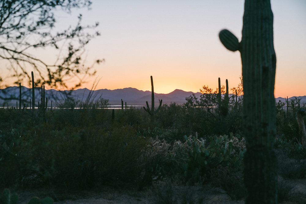 saguaro-115.jpg