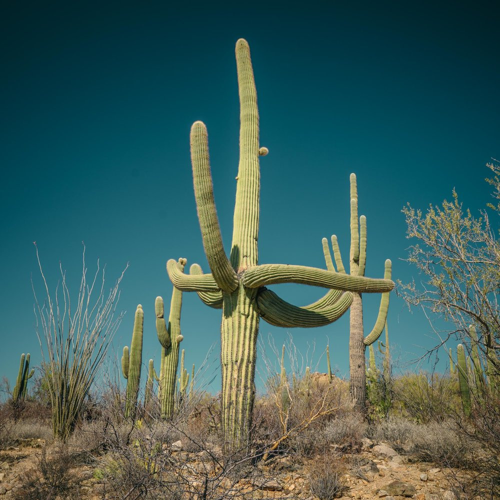 saguaro-40.jpg