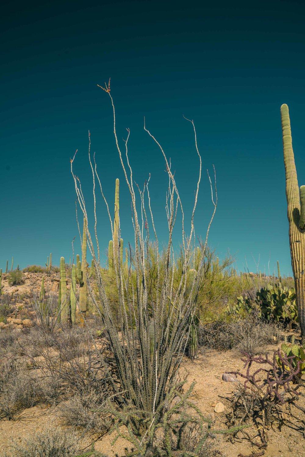 saguaro-33.jpg