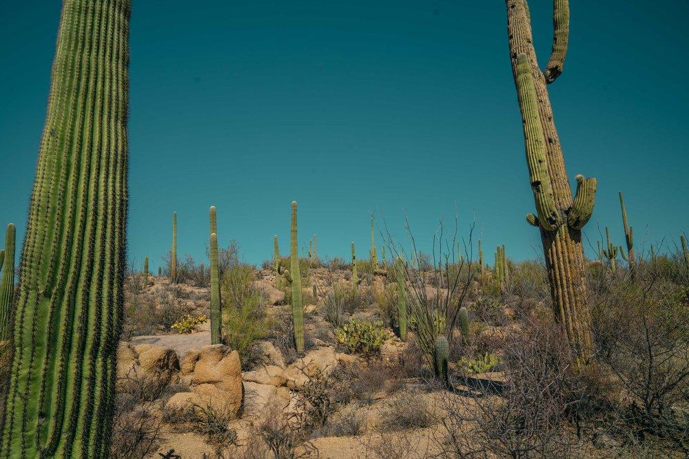 saguaro-34.jpg