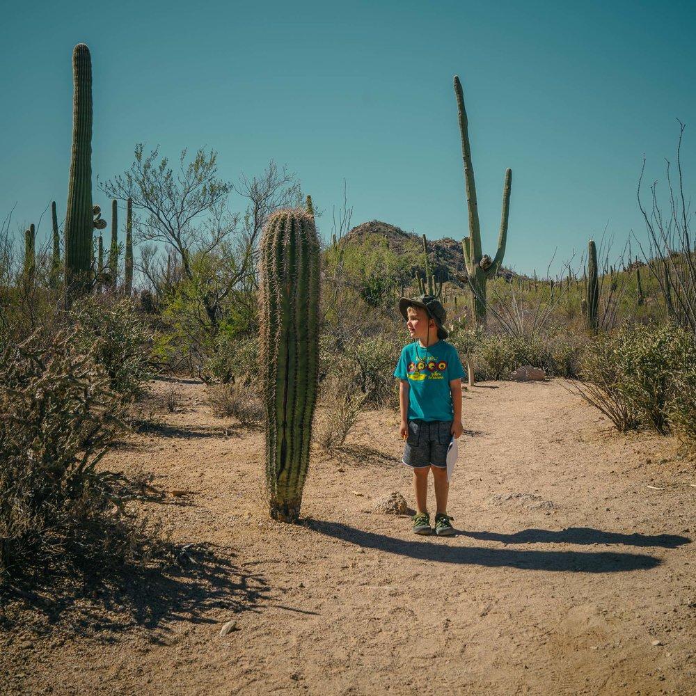saguaro-35.jpg