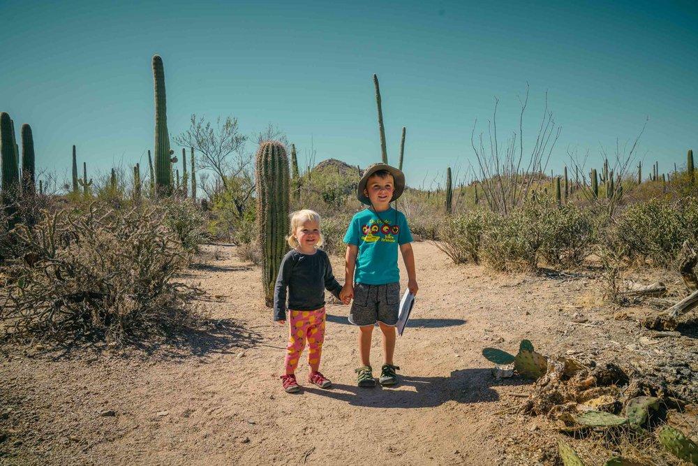 saguaro-36.jpg
