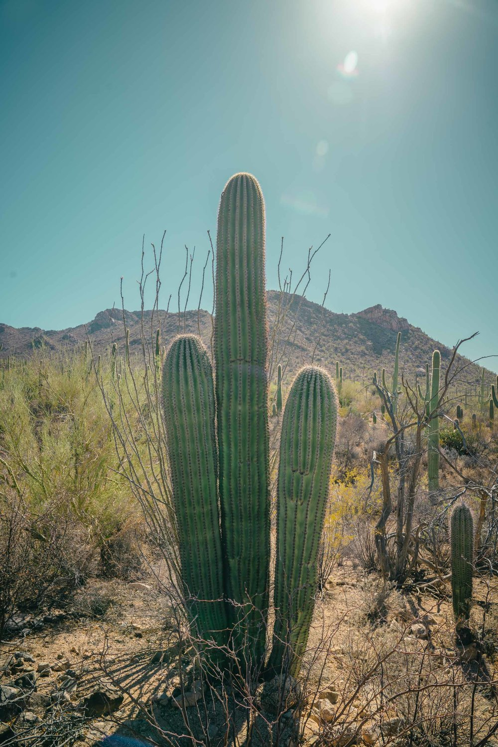 saguaro-41.jpg