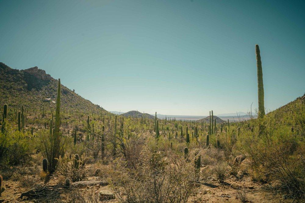 saguaro-43.jpg